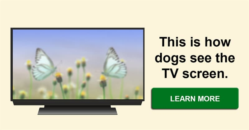 animals Story: What is it like for dogs to watch TV?