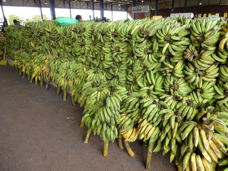 Society Story: #3 Banana ripening gas