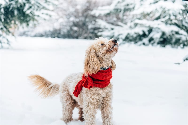 animals Story: 11 heartening pictures of winter-loving animals that will cheer you up!