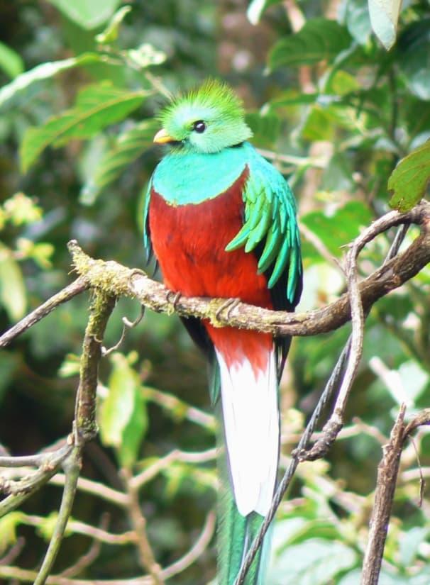 Nature Story: #14 Resplendent quetzal