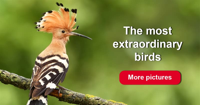 Nature Story: 15 pictures of the most unusual and gorgeous bird species on Earth