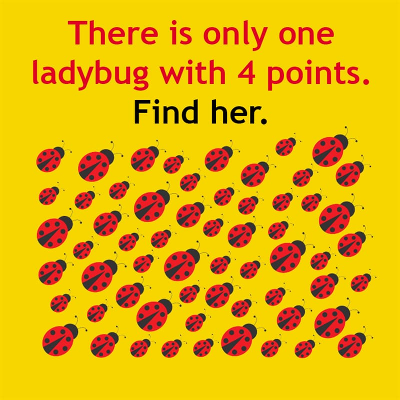 IQ Story: There is only one ladybug with 4 points. Find her.