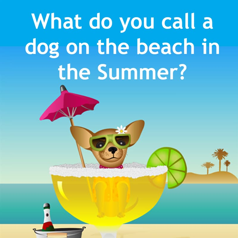 IQ Story: What do you call a dog on the beach in the Summer?