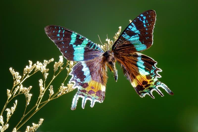 Nature Story: #10 Madagascan sunset moth