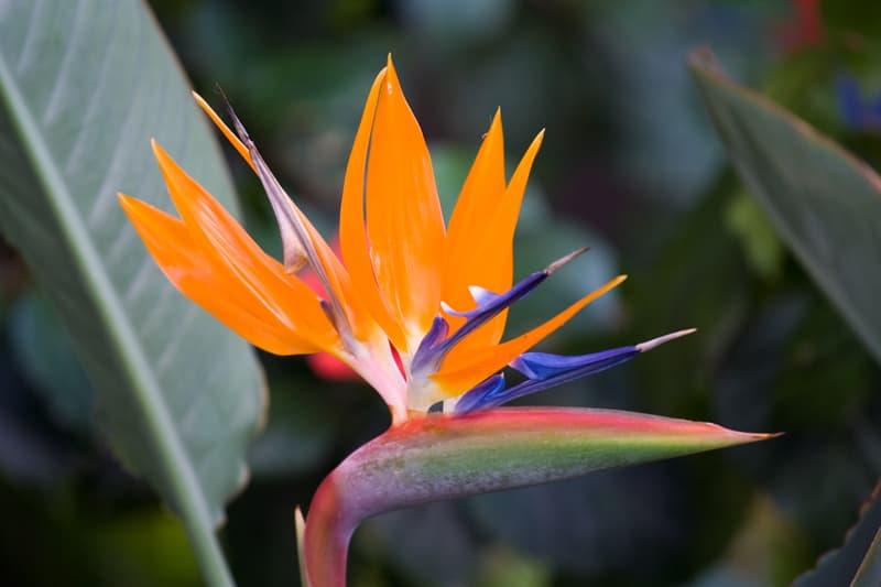 Nature Story: #1 Bird of paradise flower