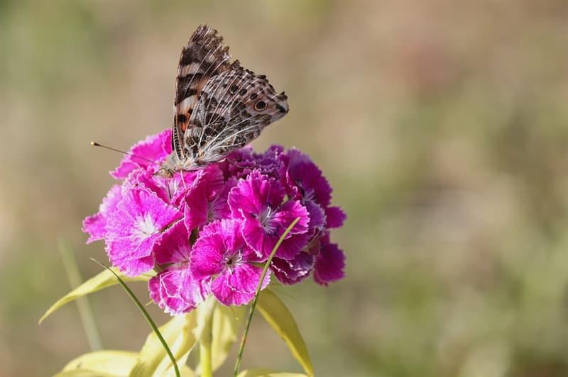 Nature Story: #9 Carnation