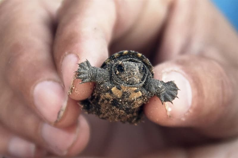 animals Story: #1 These baby turtles are something
