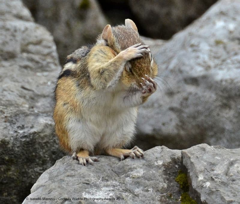 """Society Story: #11 """"I'll Hold My Breath Until I Get Some Nuts"""" by Isabelle Marozzo"""