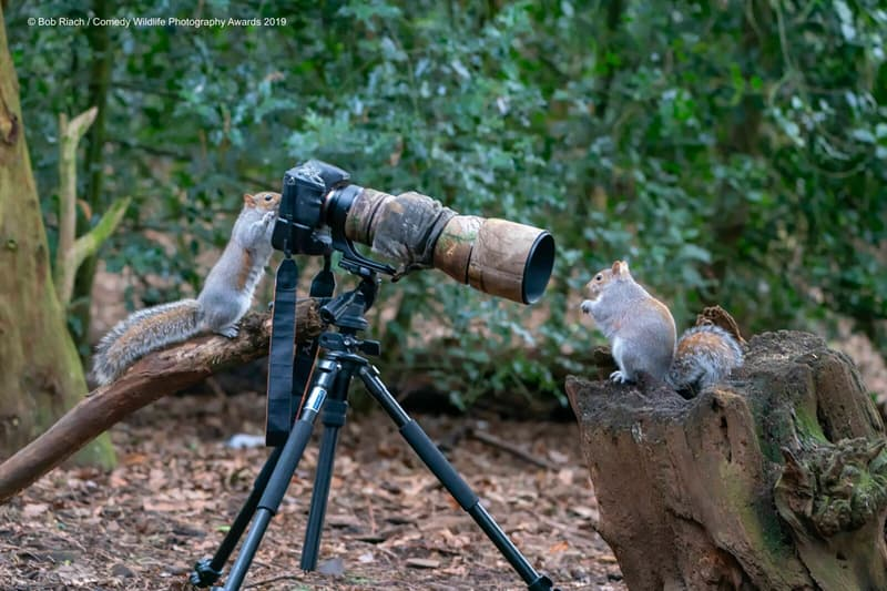"""Society Story: #5 """"The Photographer At Work"""" by Bob Riach"""
