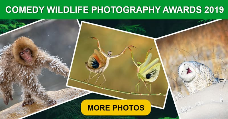 Society Story: These emotional photos from Comedy Wildlife Photography Awards 2019 will make you laugh