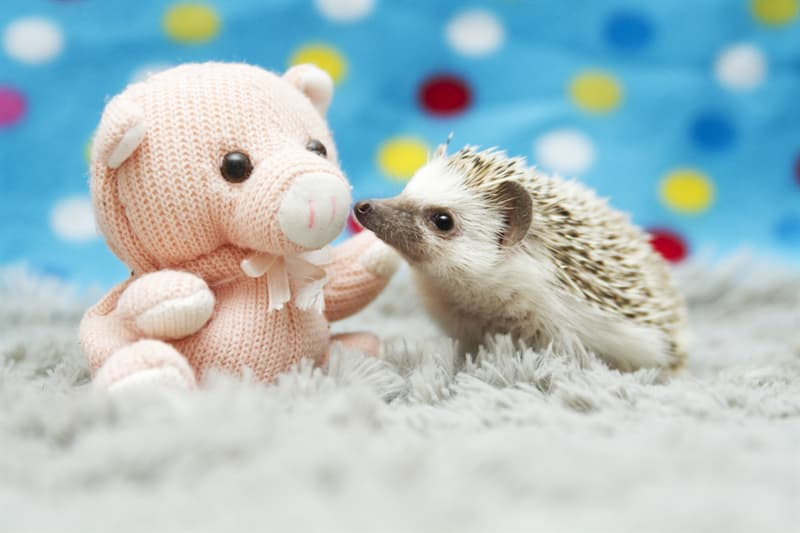 animals Story: We promise these 12 pics will shock you with their super cuteness