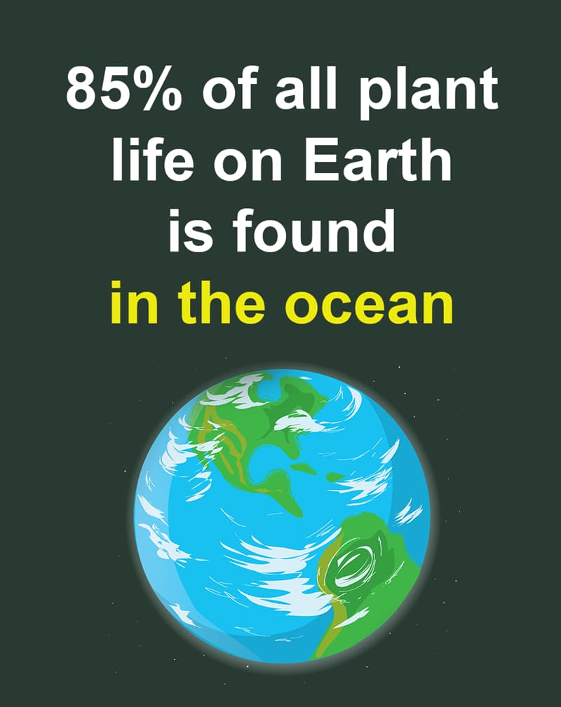 Geography Story: 85% of all plant life on Earth is found in the ocean