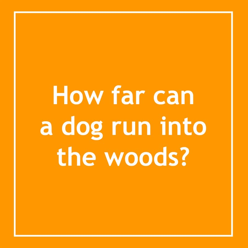 IQ Story: How far can a dog run into the woods? 10 short riddles most people will find confusing
