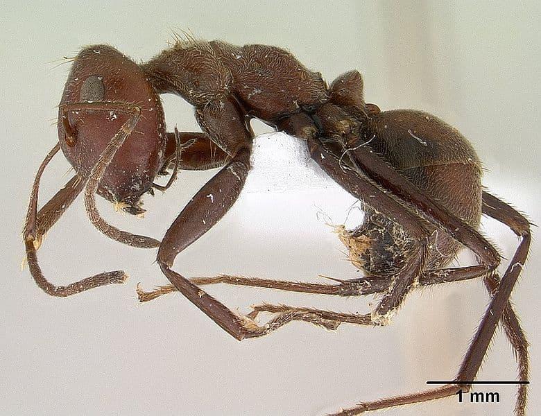 animals Story: #1 Kamikaze ants