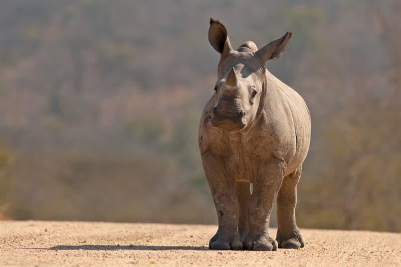 animals Story: #5 Baby rhinos
