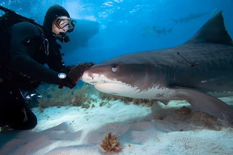animals Story: #7 Shark