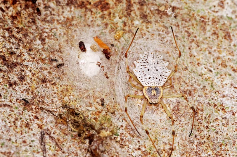 animals Story: #8 Ornamental tree trunk spider