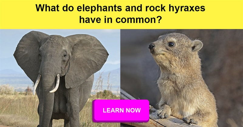 animals Story: Animal facts that will definitely shock you