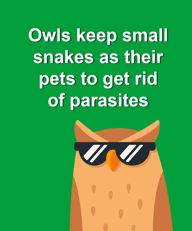 Nature Story: Owls keep small snakes as their pets to get rid of parasites