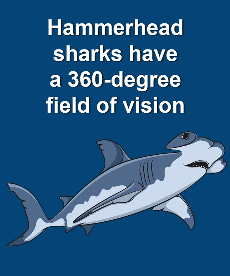 Nature Story: Hammerhead sharks have a 360-degree field of vision