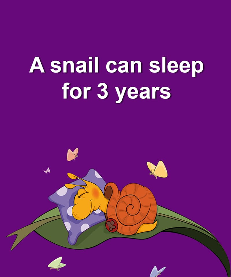 Nature Story: A snail can sleep for 3 years