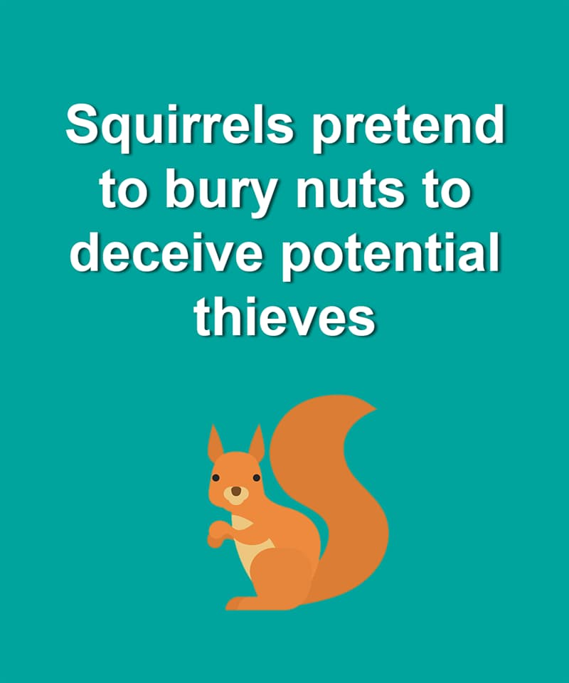 Nature Story: Squirrels pretend to bury nuts to deceive potential thieves