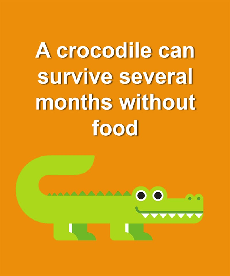 Nature Story: A crocodile can survive several months without food