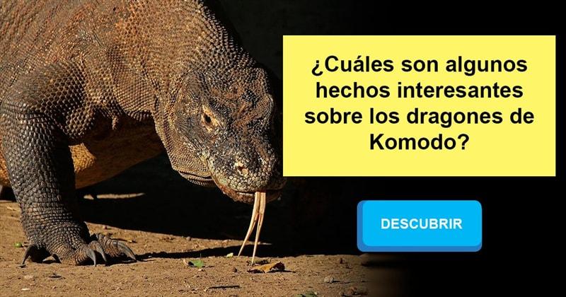 Naturaleza Historia: ¿Cuáles son algunos hechos interesantes sobre los dragones de Komodo?