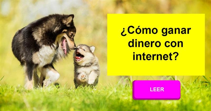 Sociedad Historia: ¿Reconocería un perro a su madre después de unos años? ¿Se reconocerían los dos? ¿Por qué o por qué no?