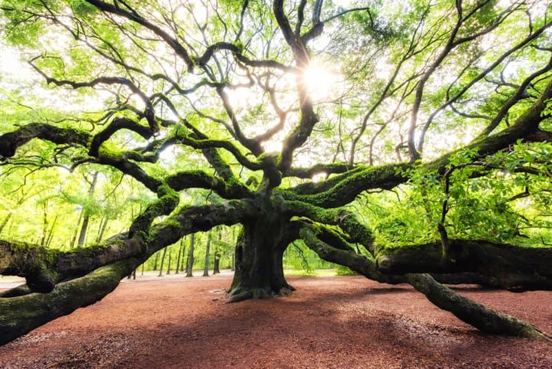 Geography Story: #4 Angel Oak tree, South Carolina, USA