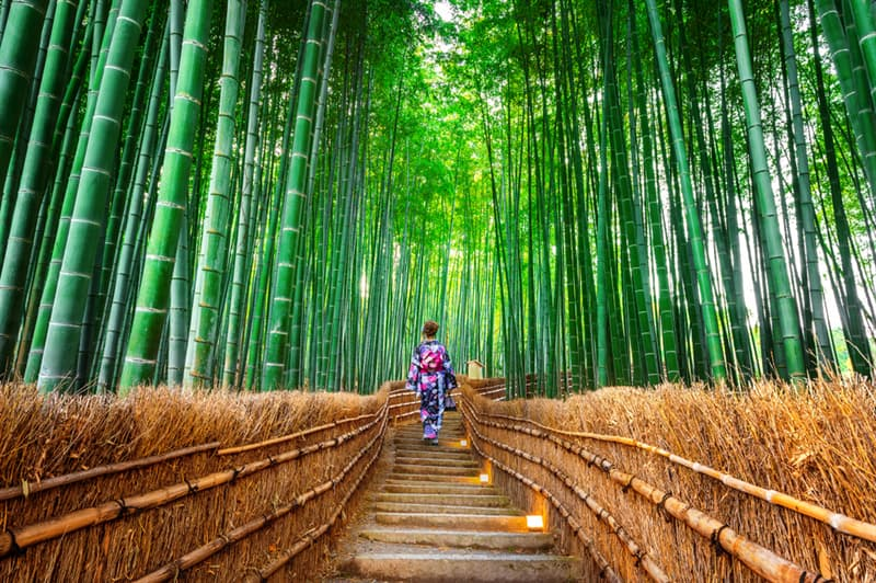 Geography Story: #5 Bamboo forests, Japan