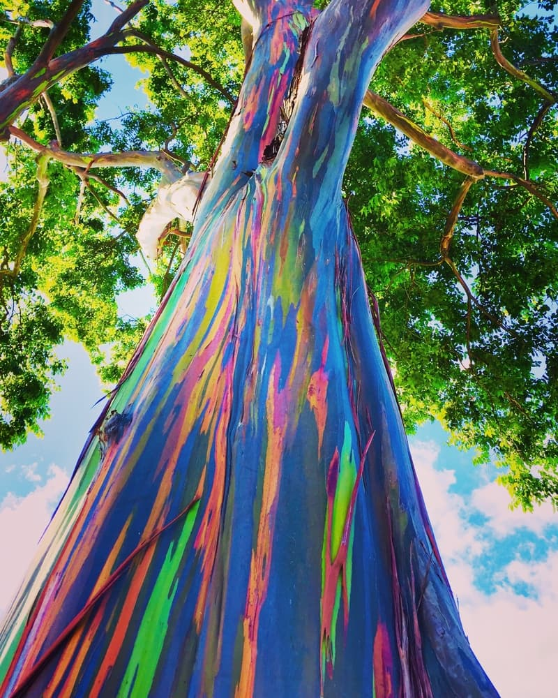 Geography Story: Colorful and spectacular – unique trees and forests from around the world