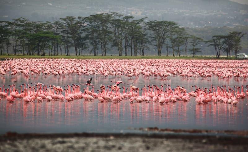 Geography Story: #2 Lake Nakuru, Kenya