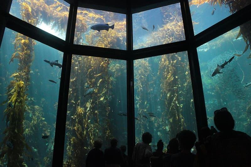 Culture Story: #7 Jeanne Villepreux-Power – Aquarium