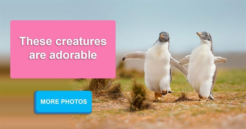 Geography Story: 15 amazing photos of graceful penguins