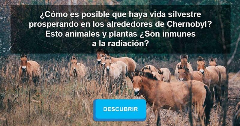 Сiencia Historia: ¿Cómo es posible que haya vida silvestre prosperando en los alrededores de Chernobyl? Esto animales y plantas ¿Son inmunes a la radiación?