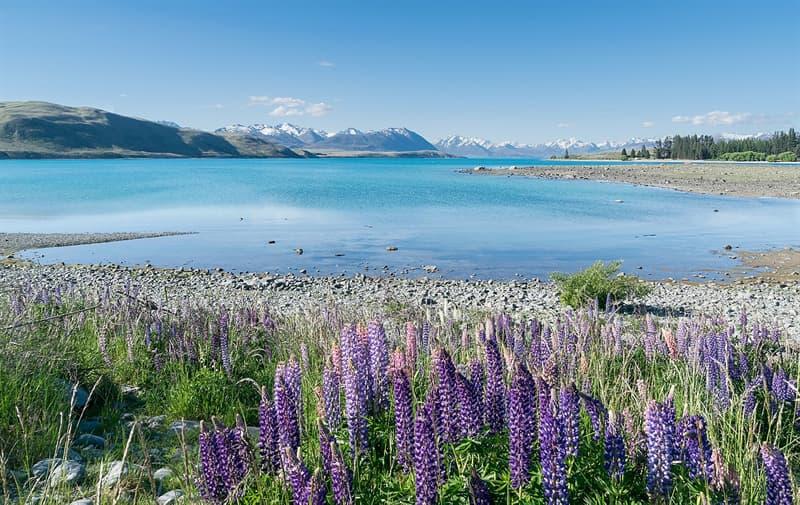 Nature Story: #10 Lake Tekapo, New Zealand