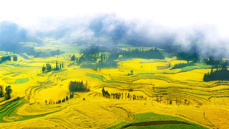 Nature Story: #9 Rapeseed fields in Luoping, China