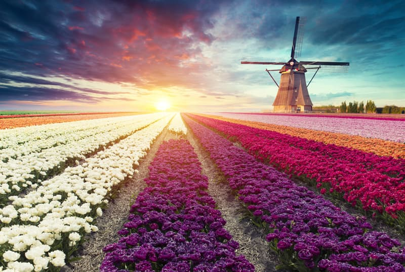 Nature Story: Majestic and colorful – the most beautiful flower fields in the world