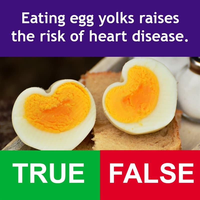 Science Story: Eating egg yolks raises the risk of heart disease.