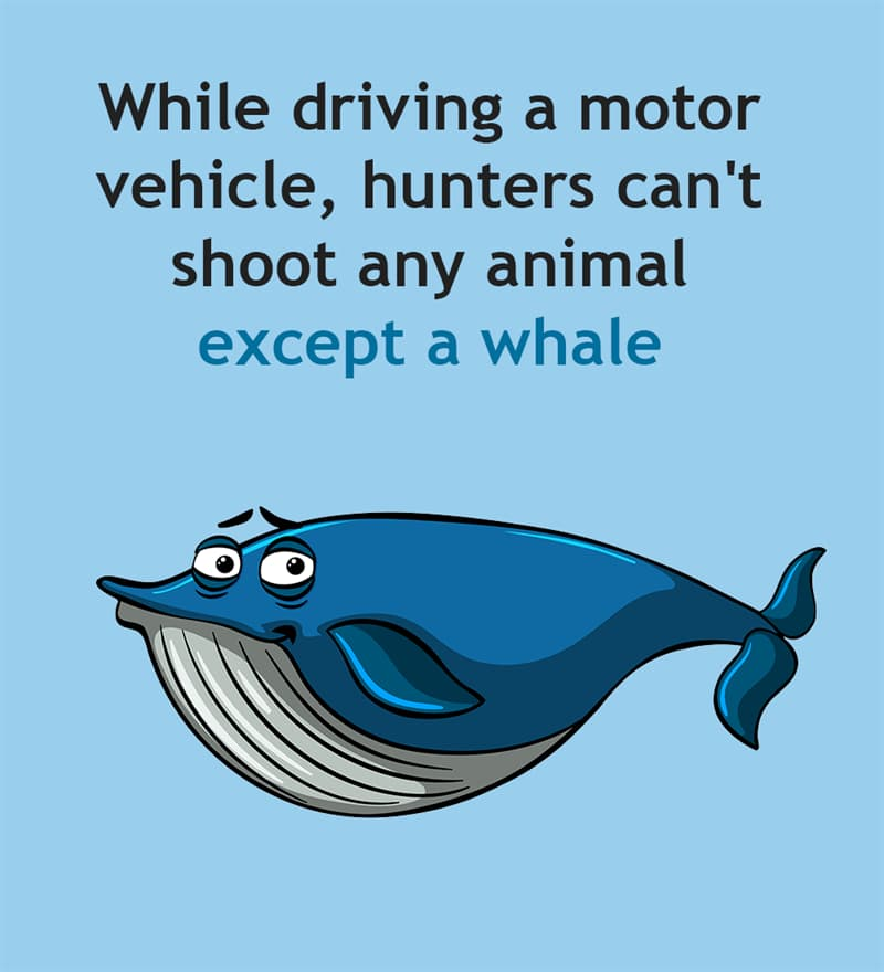 Society Story: While driving a motor vehicle, hunters can't shoot any animal except a whale