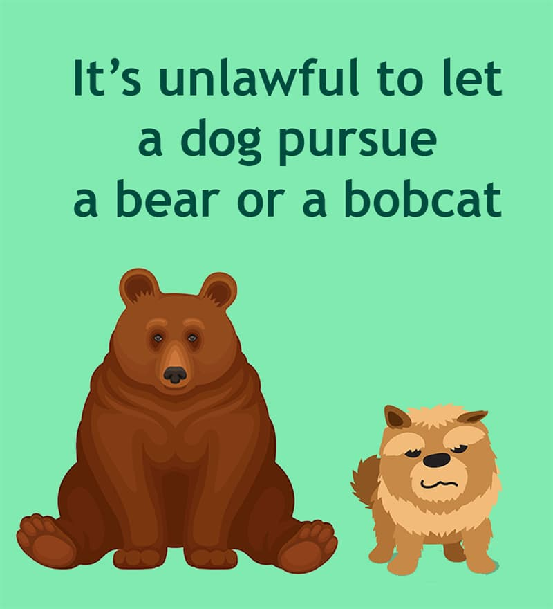 Society Story: It's unlawful to let a dog pursue a bear or bobcat at any time