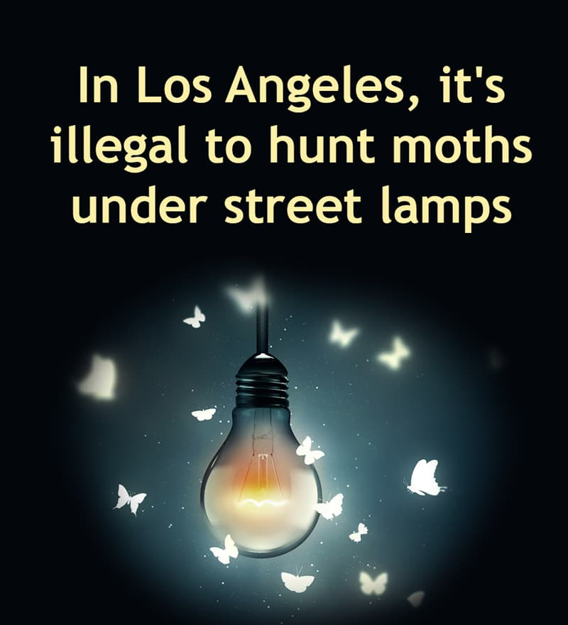 Society Story: In Los Angeles, it's illegal to hunt moths under street lamps