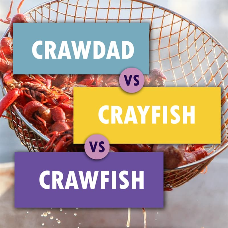 Geography Story: #8 Freshwater crustaceans which look like tiny lobsters