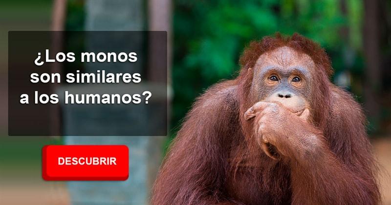 Сiencia Historia: ¿Los monos son similares a los humanos?