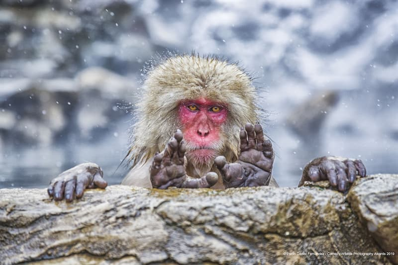 Nature Story: These emotions are priceless – meet the finalists of Comedy Wildlife Photography Awards 2019