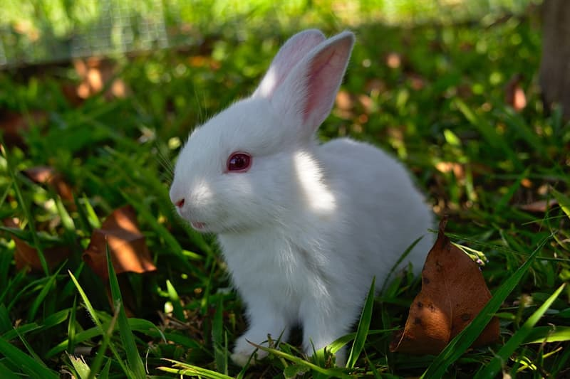Nature Story: #14 This baby rabbit looks so pure!