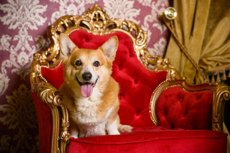 animals Story: reasons to love corgis Royal Dogs Queen Elizabeth