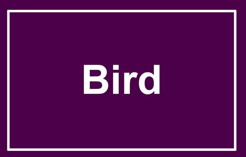 Society Story: Bird