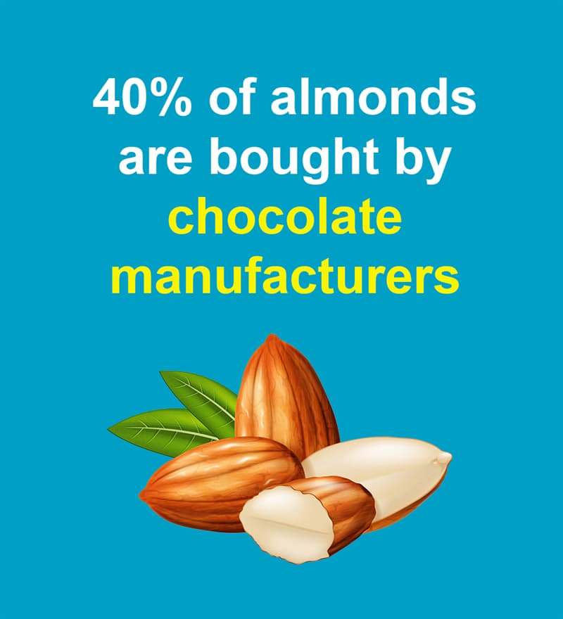 Nature Story: 40% of almonds are bought by chocolate manufacturers